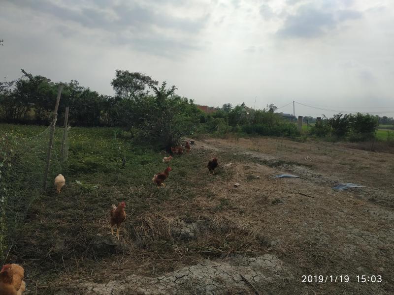 Bán đất nền khu dân cư đông đúc 135m2, đất thổ cư, đường Mỹ Lộc- Phước Hậu giá tốt 750 triệu