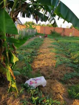 Bán 2 lô đất nền đất thổ cư 9 chủ Ấp Phước Thuận, xã Phước Lâm, huyện Cần Giuộc, tỉnh Long An