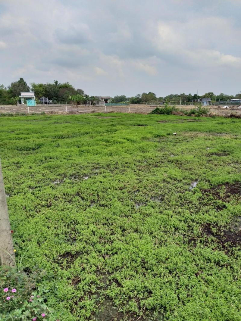 Bán 1092m2 đất lúa hẻm đường Cộng Đồng Lộc Trung, hẻm thông ra đường lớn, Xã Mỹ Lộc, Cần Giuộc, LA