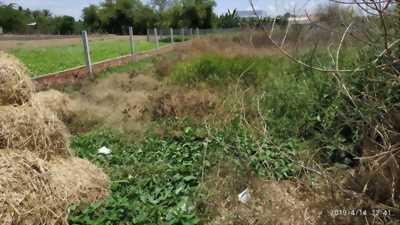 Đất bán tại đường Cộng đồng Lộc Trung - Mỹ Lộc - Cần Giuộc - Long An.