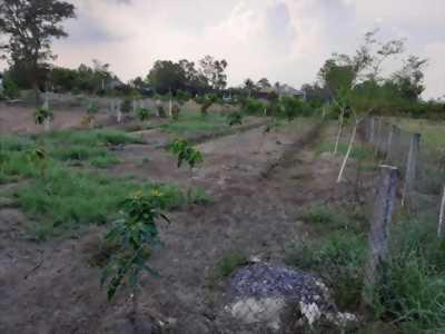 Bán đất vườn đường xe hơi hẻm Vườn lan Út Trâm, Mỹ Lộc, Cần Giuộc, Long An.