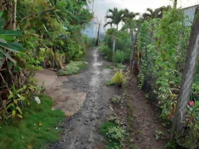 Bán đất vườn kèm đất lúa ở đường Dương Thị Hai, ấp Thanh Ba, xã Mỹ Lộc, Cân Giuộc, Long An.