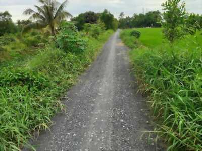 Cần bán đất thổ cư đường xe tải ở Phước Lâm, Cần Giuộc, Long An.