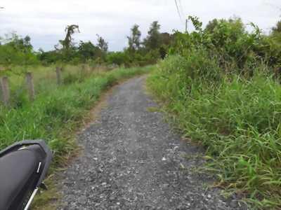 Bán đất vườn hẻm đá xanh đường Giao thông Nông thôn, Mỹ Lộc, Cần Giuộc, Long An