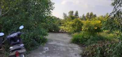 Cần bán đất vườn đẹp, vuông vứt, đường xe tải tại ấp Phước Hưng, xã Phước Lâm, huyện Cần Giuộc, tỉnh Long An
