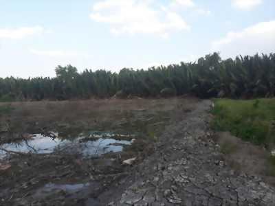 Chính chủ gửi bán miếng đất lúa đẹp, vuông vứt tại xã Tân Chánh, huyện Cần Đước, tỉnh Long An.
