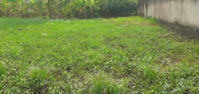 Bán đất thổ cư cách mặt tiền khoảng 100m, đường ấp Lộc Tiền, xã Mỹ Lộc, huyện Cần Giuộc, Long An