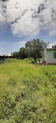 Bán 2230m2 đất thổ và lúa hẻm 1,5m đường ấp Phước Hưng 1, xã Phước Lâm, huyện Cần Giuộc, Long An