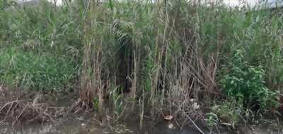 Bán đất vườn đường Tập Đoàn 4, xã Tân Kim, huyện Cần Giuộc, tỉnh Long An