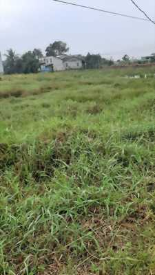Bán đất ruộng đường xe 16 chỗ chạy thoải mái nằm ở xã Tân Kim, huyện Cần Giuộc, Long An