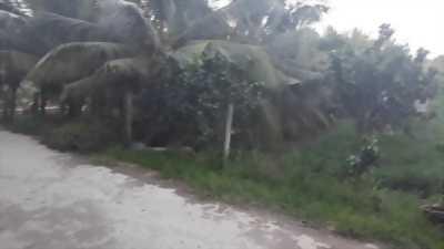 Bán đất vườn dừa DTSD 700m2, giá 550 triệu /công, gần ủy ban xã Phú An Hoà, Bến Tre