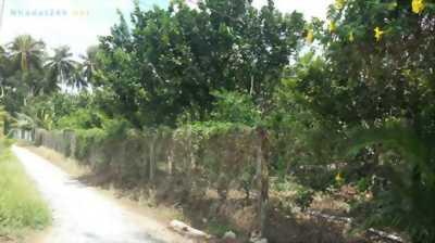 Bán đất vườn bưởi đang thu hoạch tại Xã Phú An Hòa, Châu Thành, Bến Tre.