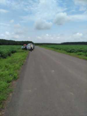 Bán Đất Chơn Thành, Bình Phước 1000m, 480 triệu