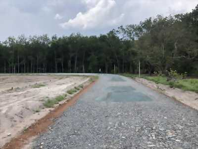 đất chơn thành, 460tr/300m2, shr, thổ, BP.