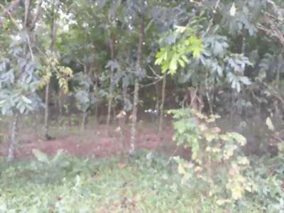 Ra gấp vài mẫu đất ở Tây Ninh