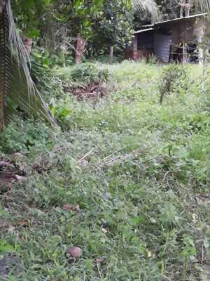 Ra gấp dùm chị kế nhà vài mẫu đất ở Phước Minh, Tây Ninh.