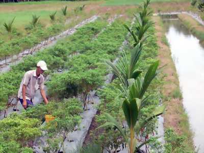 Bán đất vườn có dừa tại ấp 3 Châu Bình.