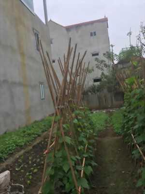 82m2 đất ở thôn An Thọ  - An Khánh giá 12 triệu/m2