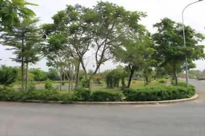 Bán đất biệt thự khu đô thị mới Tuệ Tĩnh 168m2