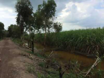 [LONG AN] Cần Bán Gấp - Đất nông nghiệp 8131 mét vuông: