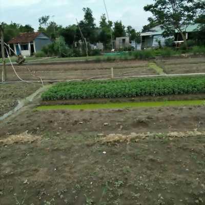 Đất nền KCN Tân Kim 350 triệu/100m2, SHR