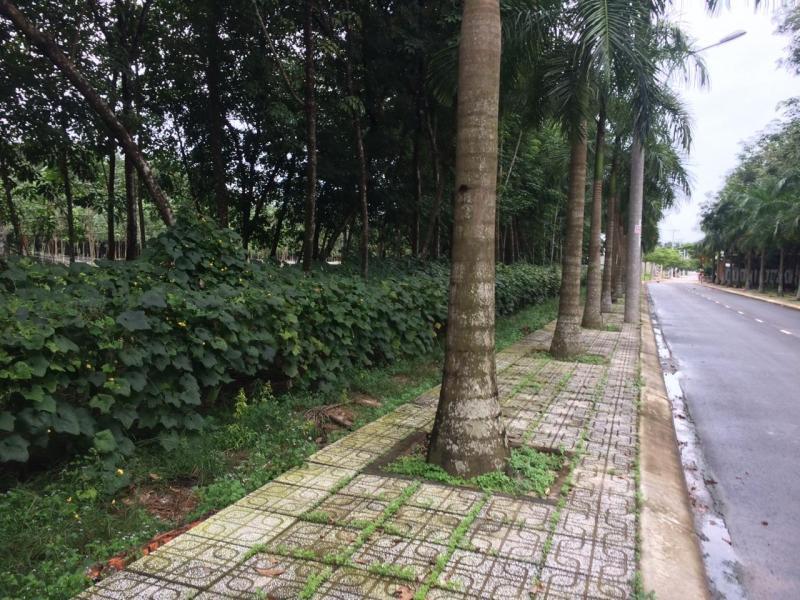 Mảnh đất gần KDC rich home chỉ 200tr