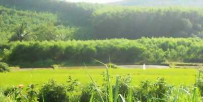 Đất nông nghiệp