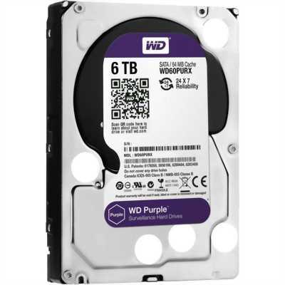 Ổ cứng WD Purple từ Western Digital & Seagate SkyHawk.