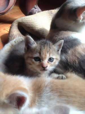 Những em mèo lai xinh yêu cần tìm nơi nương tựa mới