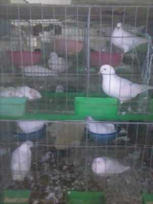 Mình có bán lồng nuôi thỏ công nghiệp sll với giá hữu nghị, lấy nhiều mình sẽ fix mạnh giá cho mọi người