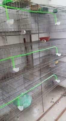 Mình cần bán lồng nuôi chim bồ câu, chuồng thỏ tốt giá rẻ