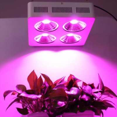 Đèn led trồng cây, quang hợp