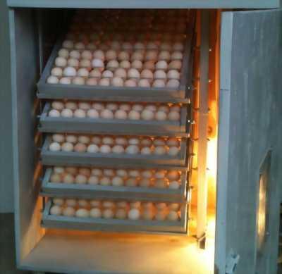 Cần bán 1 lò ấp trứng (90 trứng)