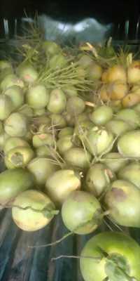 Dừa bến tre 75k/ 10 trái nha mọi người