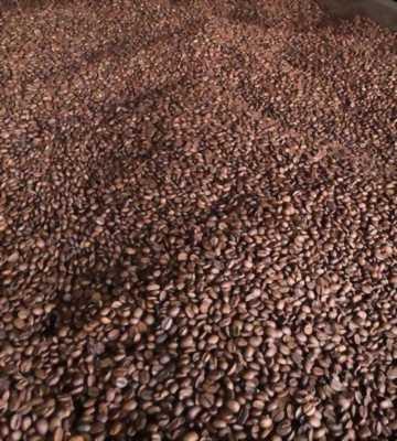 Cà phê hạt culi robusta giá sỉ, cần tìm đại lý phân phối