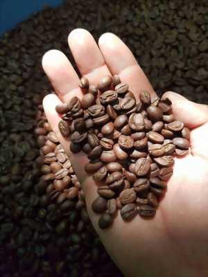 Sản xuất và cung cấp Cà phê hạt ROBUSTA  giá gốc