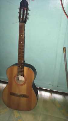 Bán đàn ghita Tân văn