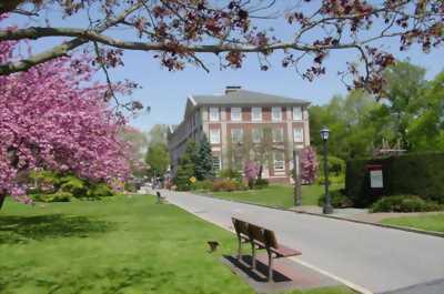 Học tập tại New York – trung tâm kinh tế lớn mạnh nhất thế giới với trường đại học Adelphi