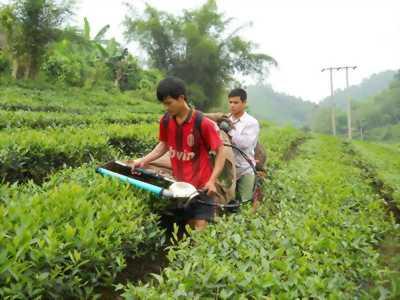 Máy thu hoạch chè cầm tay Ochiai GX3 chính hãng