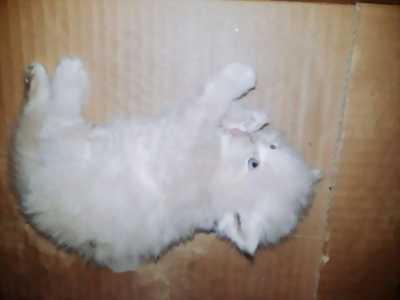 Mèo ald×34