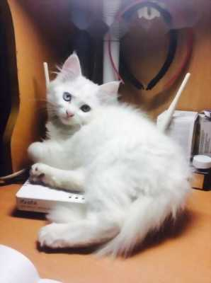 Mèo Ald