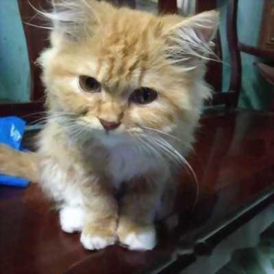 Cần tìm chủ cho mèo ALD