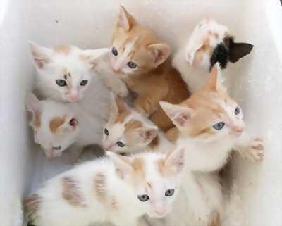 Cần bán đàn mèo cả mẹ và con