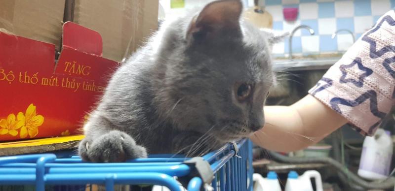 Tìm chủ cho bé mèo ALN 3 tháng tuổi