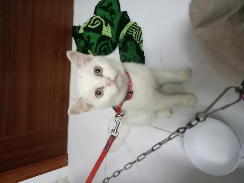 Cần tìm chủ mới cho bé mèo nhà em