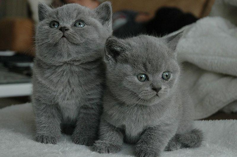 Mình muốn mua 1 mèo con
