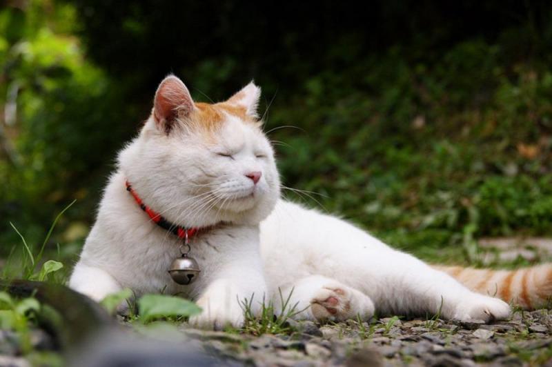 Tìm nhà mới cho em mèo Turkey Van