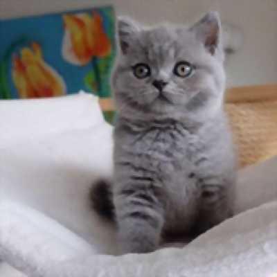 Tìm chủ yêu thương cho bé mèo ALN