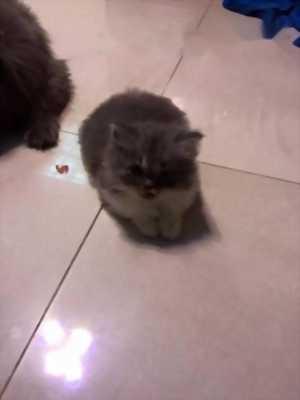 một mèo mẹ và 4 mèo a