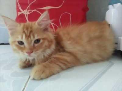 Bé mèo ALD rất hiền và thân người,  wc trong tolet